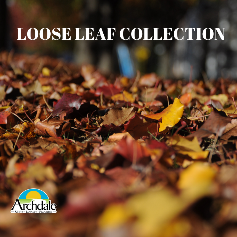 LOOSE LEAF COLLECTION